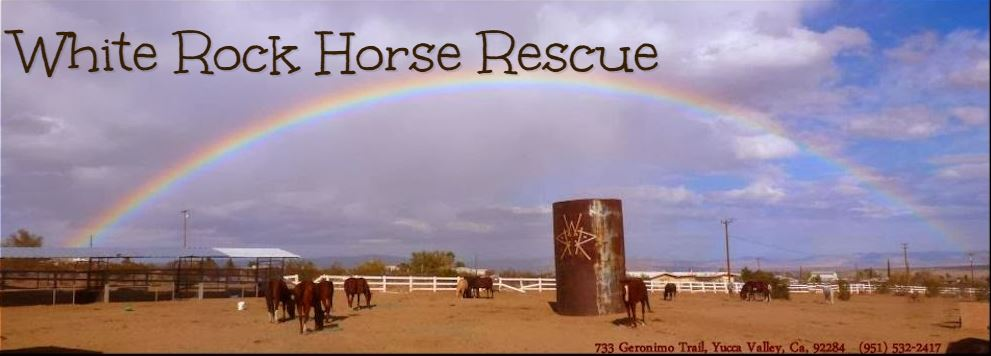 White Rock Ranch Horse Rescue